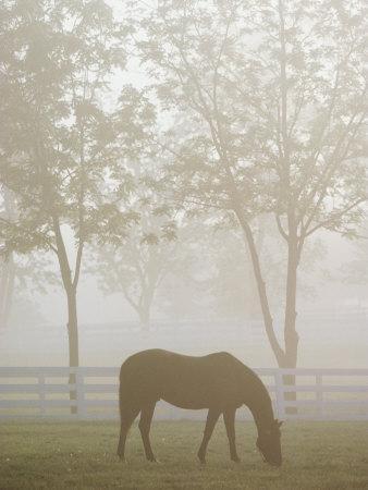 https://imgc.artprintimages.com/img/print/a-thoroughbred-gelding-crops-the-bluegrass-at-the-kentucky-horse-park_u-l-p4twxv0.jpg?p=0