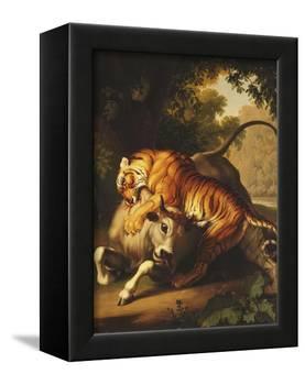 A Tiger Attacking a Bull, 1785-Johan Wenzel Peter-Framed Premier Image Canvas