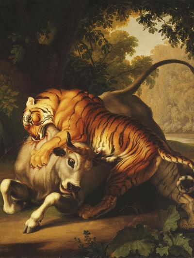 A Tiger Attacking a Bull, 1785-Johan Wenzel Peter-Giclee Print
