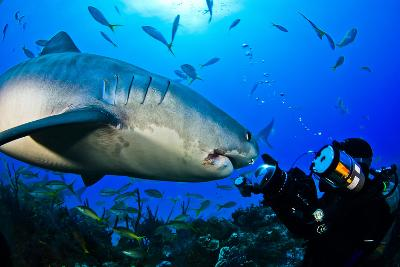 A Tiger Shark Approaching a Diver on a Reef-Jim Abernethy-Photographic Print