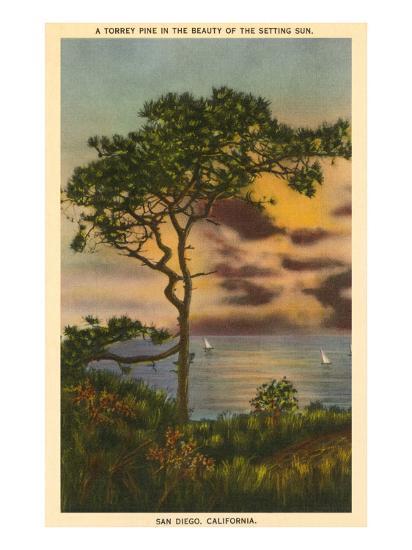A Torrey Pine, San Diego, California--Art Print