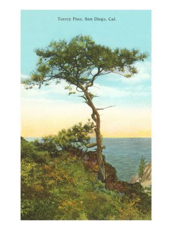 A Torrey Pine, San Diego, California Art Print By | Art.com