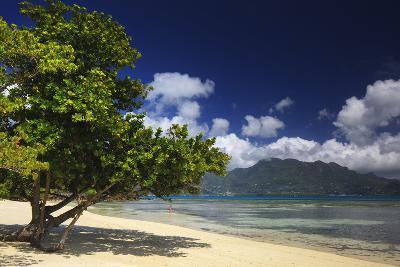 A Tourist Enjoying Warm Waters of Indian Ocean Surrounded by an Idyllic Setting in Seychelles-Garry Ridsdale-Photographic Print