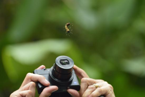 A Tourist Takes a Photograph of a Caterpillar Hanging from a Thread of Silk-Jonathan Kingston-Photographic Print