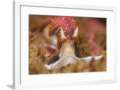 A Toxic Nudibranch-Cesare Naldi-Framed Photographic Print