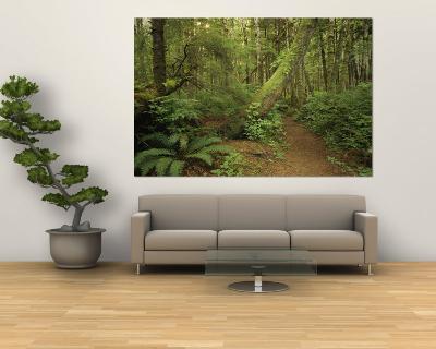 A Trail Cuts Through Ferns and Shrubs Covering the Rain Forest Floor-Jim Sugar-Wall Mural