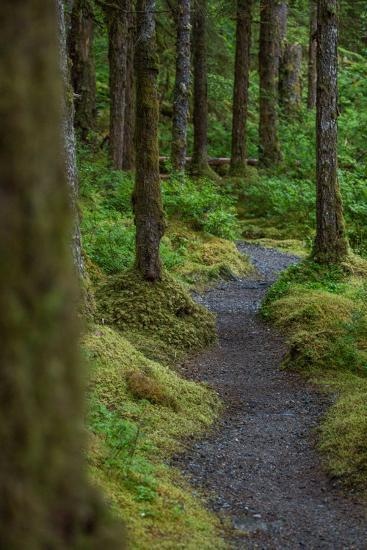 A Trail Leads Through the Forest in Glacier Bay National Park-Erika Skogg-Photographic Print