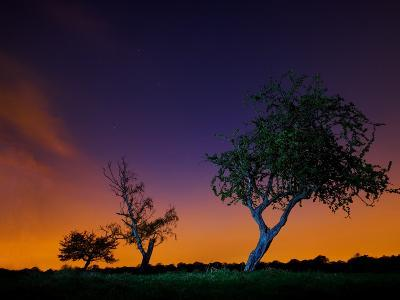 A Tree at Night with an Orange and Purple Sky-Alex Saberi-Photographic Print