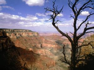 A Tree Frames a Spectacular View of Arizona's Grand Canyon