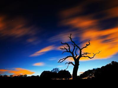 A Tree in Richmond Park at Night with Fast Moving Clouds-Alex Saberi-Photographic Print