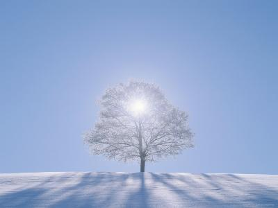 A Tree in the Snow Field--Photographic Print