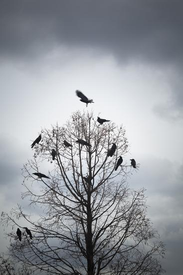 A Tree in Which Many Crows Have Rest-Hiroshi Watanabe-Photographic Print