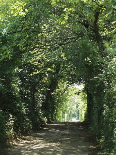 A Tree-Lined Country Road-Darlyne A^ Murawski-Photographic Print