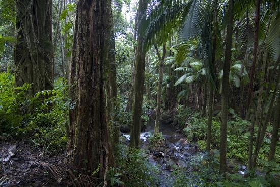 A tropical forest-Natalie Tepper-Photo