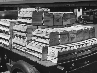 A Truckload of Freshly Harvested Canteloupes in Crates--Photographic Print