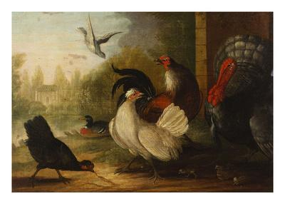 A Turkey, a Duck and Poultry in an Ornamental Garden-Marmaduke Cradock-Premium Giclee Print