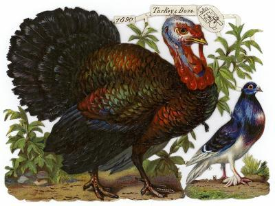 A Turkey Pictured Alongside a Dove--Giclee Print