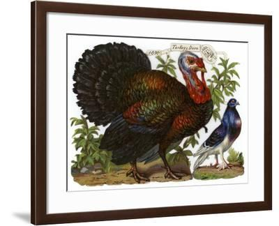 A Turkey Pictured Alongside a Dove--Framed Giclee Print