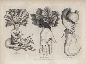 A Turnip, a Raddish, a Parsnip