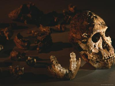 A Two-Million-Year-Old Fossil of Australopithecus Robustus-Kenneth Garrett-Photographic Print