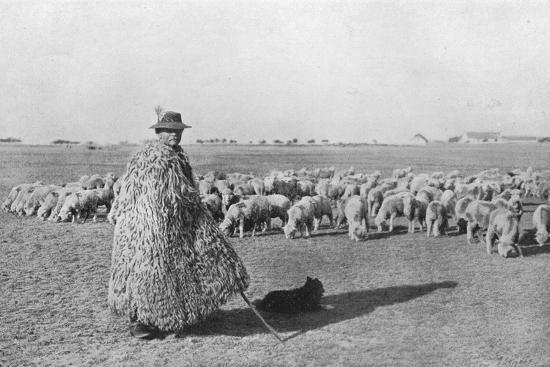 'A typical shepherd and his flock on the plains of Hungary', 1915-Unknown-Photographic Print
