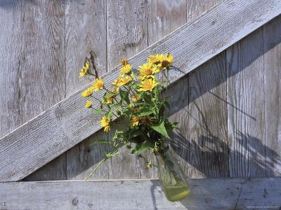 A Vase of Wild Flowers Hangs from a Barn Door in Nebraska-Joel Sartore-Photographic Print