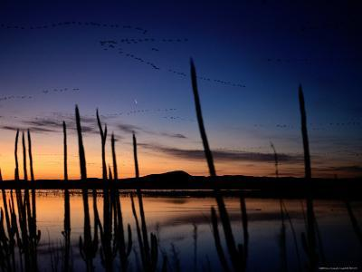 A View of Ducks and Geese Flying over a Lake at Sunset-Joel Sartore-Photographic Print