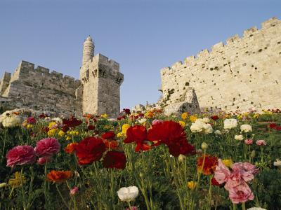 A View of Flowers Growing Outside a Castle-Richard Nowitz-Photographic Print