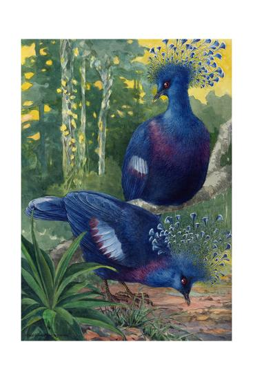 A View of the Flimsy Crests of Two Victoria Crowned Pigeons-Hashime Murayama-Giclee Print