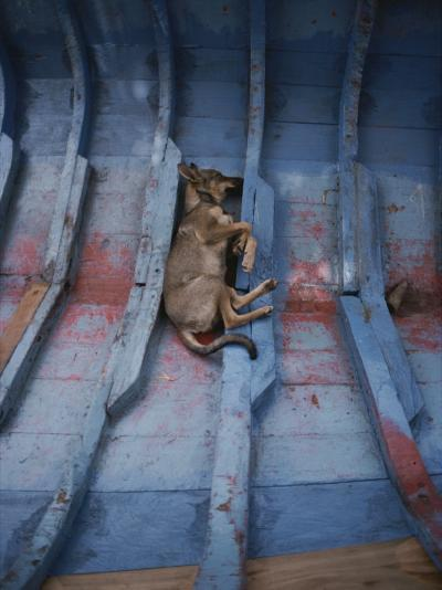 A Village Dog Naps in the Bottom of a Cat Boat-Bill Curtsinger-Photographic Print