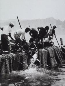 Fisherman Armed with Harpoons Hoisting a Tuna on Board their Boat by A. Villani