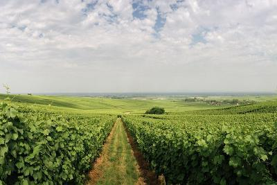 A Vineyard in Alsace, France-Macduff Everton-Photographic Print