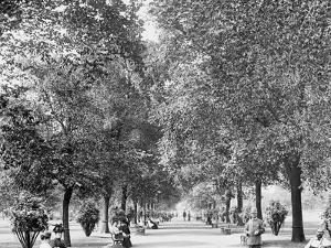 A Walk in Lincoln Park, Chicago