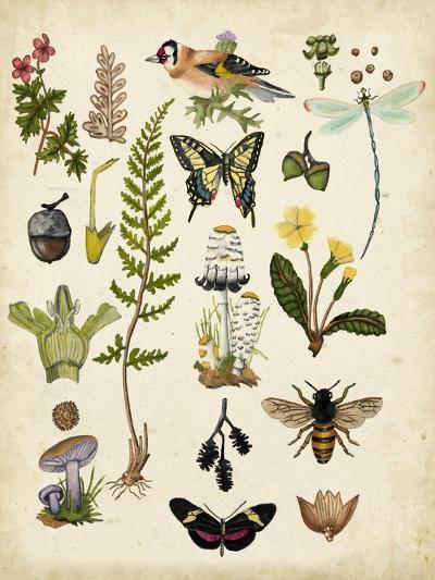 A Walk in the Forest I-Naomi McCavitt-Art Print