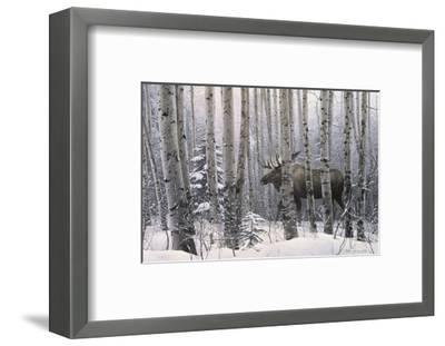 A Walk in the Woods-Stephen Lyman-Framed Art Print