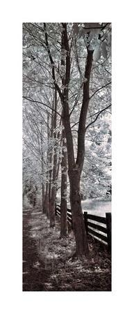 https://imgc.artprintimages.com/img/print/a-walk-to-remember-ii_u-l-f7orco0.jpg?artPerspective=n