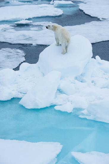A Wary Polar Bear Mounted on Top of a Boulder of Drift Ice-Michael Melford-Photographic Print