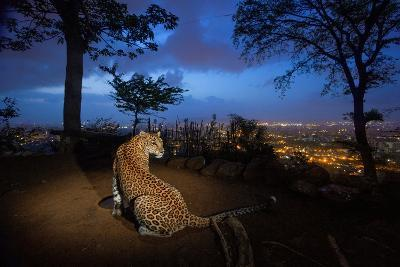 A Water Hole Attracts One of the Leopards Living around Sanjay Gandhi National Park-Steve Winter-Photographic Print