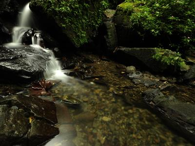 https://imgc.artprintimages.com/img/print/a-waterfall-in-a-rain-forest_u-l-pet18u0.jpg?p=0