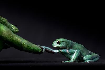 A Waxy Monkey Frog, Phyllomedusa Sauvagii, Reaches Out to Grab a Finger Painted Green-Robin Moore-Photographic Print