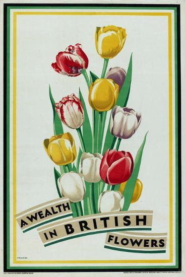 A Wealth in British Flowers, from the Series 'British Bulbs for Home Gardens'- Fawkes-Giclee Print