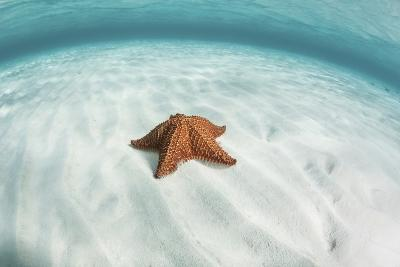 A West Indian Starfish on the Seafloor in Turneffe Atoll, Belize-Stocktrek Images-Photographic Print