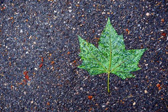 A Wet Green Leaf on the Street-Keith Ladzinski-Photographic Print