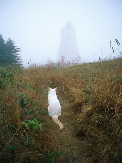 A White Cat Sits Facing the Swallowtail Lighthouse in the Fog-Bill Curtsinger-Photographic Print