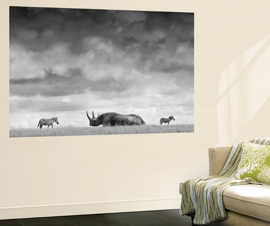 A White Rhino Lies in the Grass As Two Zebras Graze Behind-Robin Moore-Wall Mural
