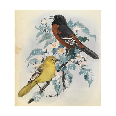 A White-Throated Sparrow Perches on a Twig Outside-Louis Agassi Fuertes-Art Print