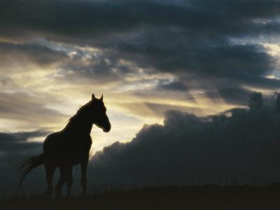 https://imgc.artprintimages.com/img/print/a-wild-horse-is-silhouetted-by-the-setting-sun-under-gathering-storm-clouds_u-l-p3l9950.jpg?p=0