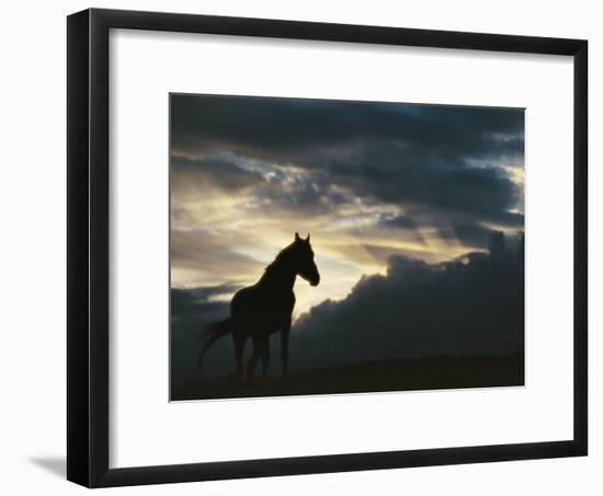 A Wild Horse is Silhouetted by the Setting Sun under Gathering Storm Clouds-Raymond Gehman-Framed Photographic Print