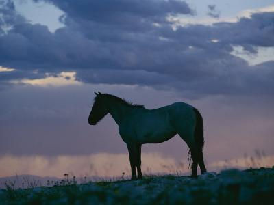 A Wild Horse is Silhouetted by the Setting Sun-Raymond Gehman-Photographic Print