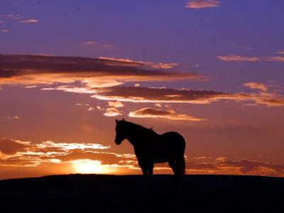 A Wild Horse Lingers at the Edge of the Badlands